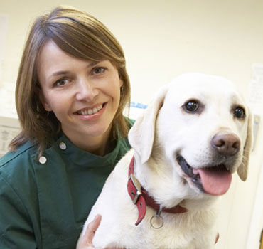 Veterinary Assistant Train At Home Stratford Career